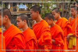 Luang Prabang Alms to the Monks (230)