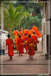 Luang Prabang Alms to the Monks (251)
